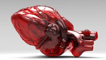 in 3D bộ phận cơ thể